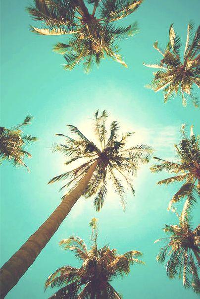 De palm trees.
