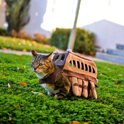 The Catbus - why do I find this amusing