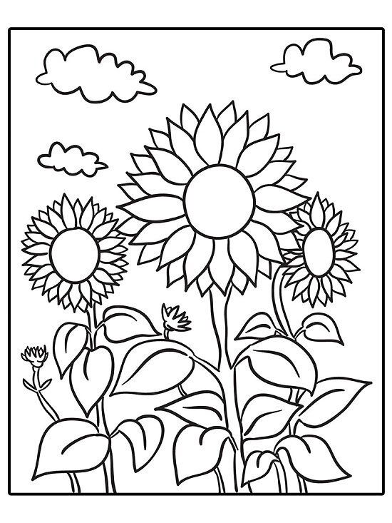 Printable Summer Coloring Pages  Sunflower coloring pages, Summer