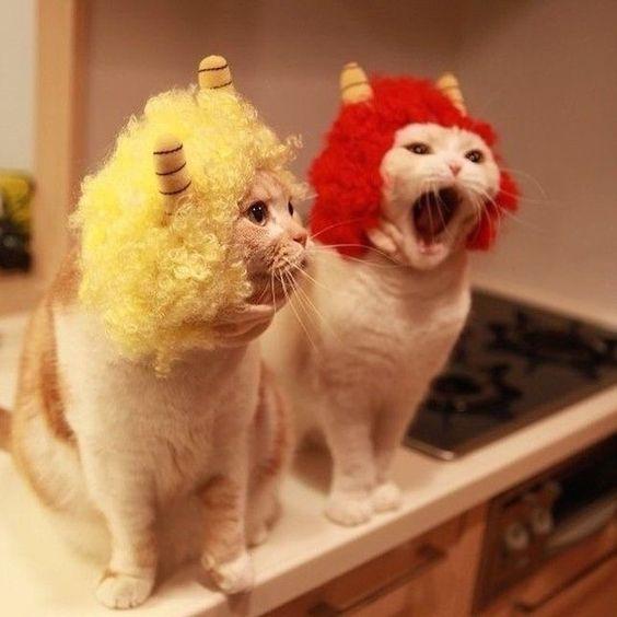 little horned cats