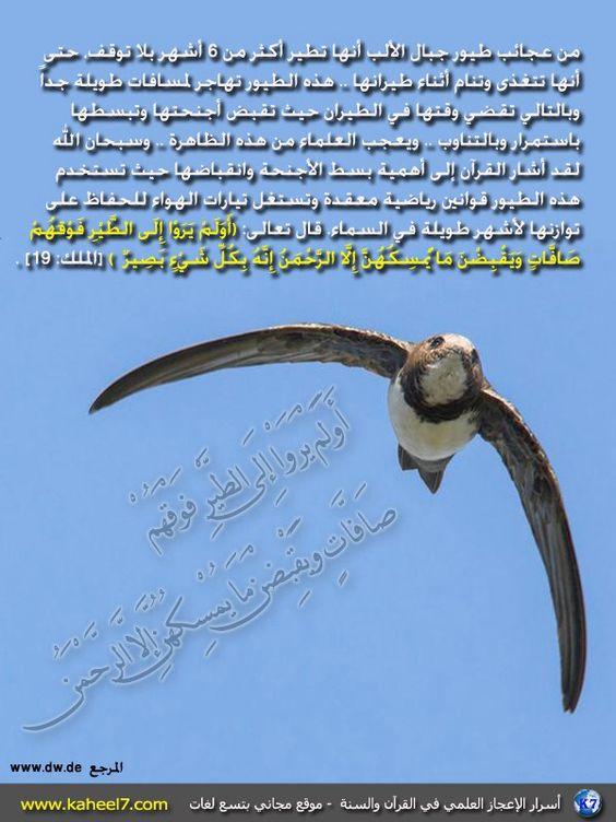 اسرار الاعجاز العلمي في القران والسنة: Vie Islam, Islam Science