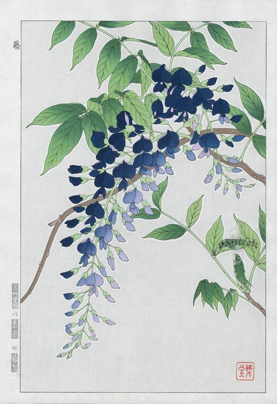 藤 Wisteria | Shodo Kawarazaki 河原崎奨堂 ( Wood-block print )