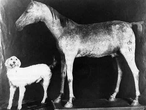 Paard van Napoleon gered|Buitenland| Telegraaf.nl: