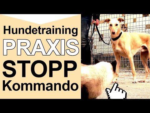 Hundetraining - Stopp Kommando - Hundetraining Online Tipps - YouTube