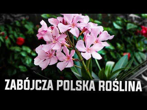 Jesli Zobaczysz Te Rosline Lepiej Uciekaj Youtube Indoor Plants Garden Plants
