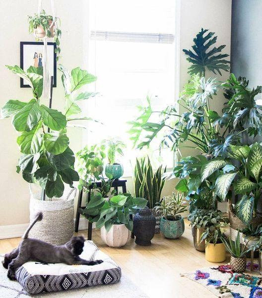 39 Creative Indoor Plants Design On A Budget Plant Decor Indoor Plant Decor Interior Plants