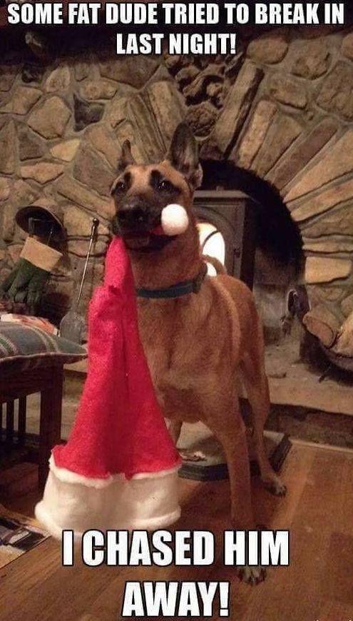 Dog Gone Funny Christmas Memes Plus Friday Frivolity Christmas Memes Funny Funny Animals Funny Dog Memes