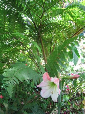 Planting Under Live Oak Tree Florida Gardening Forum Gardenweb
