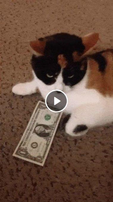 Nunca tente mexer no dinheiro de um gato