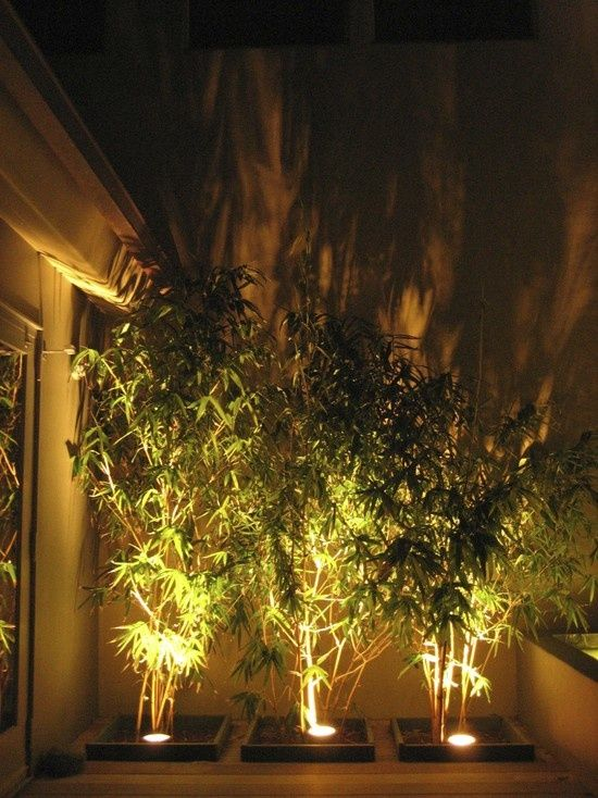 outdoor lighting elements in the backyard