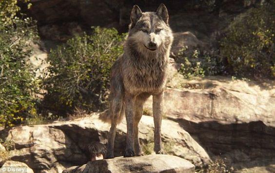 Defensive: Akela (voiced by Giancarlo Esposito) stood up for Mowgli, shouting: 'Mowgli bel...