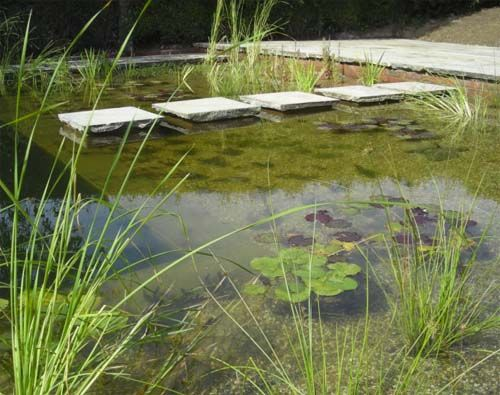 Natural swimming pool - With climate change; Britain is warming up, and more people are taking another look at that long abandoned swimming pool in the back yard. It could get more use in a warmer future.