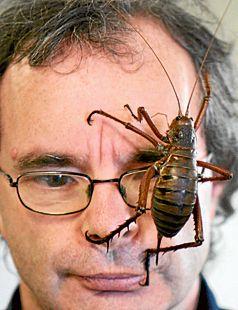 the Bug Brothers: Tree Weta