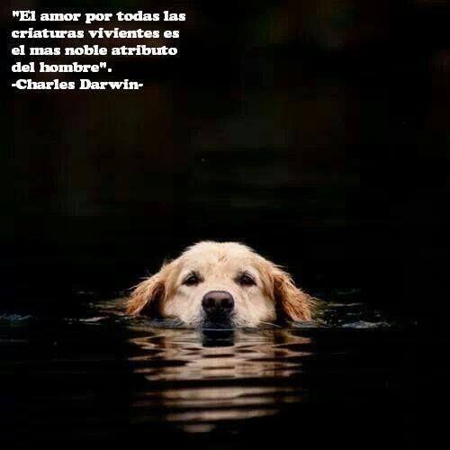 Nobleza A Los Animales Perros Frases Animales Amantes De Perros