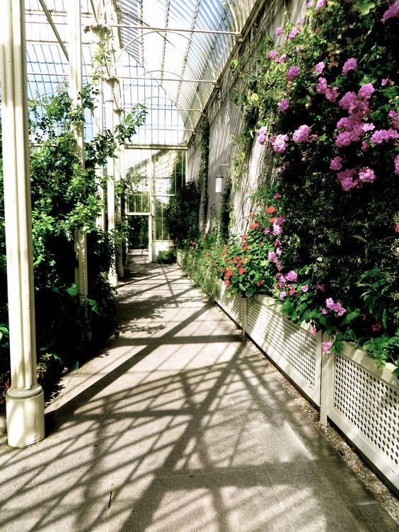 Botanic Gardens, Dublin (Photo by Suzanne C)
