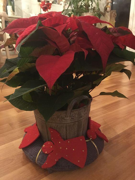 Wunderschöner Weihnachtsstern mit Adventskranz!
