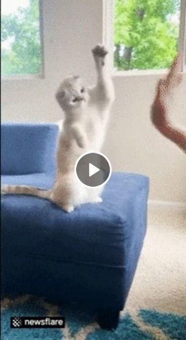 Pensa em um gatinho obediente.