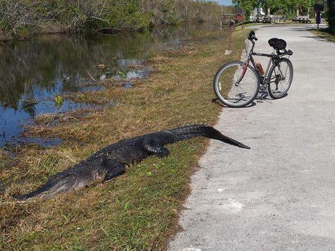 Fl Top 10 Florida Bike Trails Coast To Coast 75 Trails Best