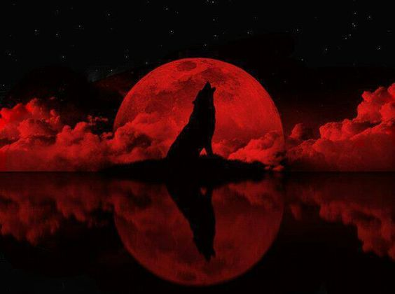 Red Wolf Howling Wolf howling to the re...