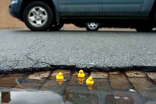 Duckies out to play on rain puddles!