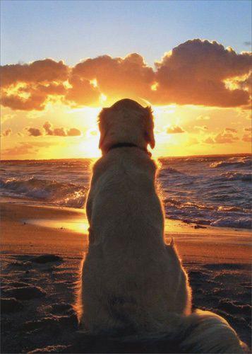 暮れなずむ海とおしゃれでかっこいい犬の壁紙