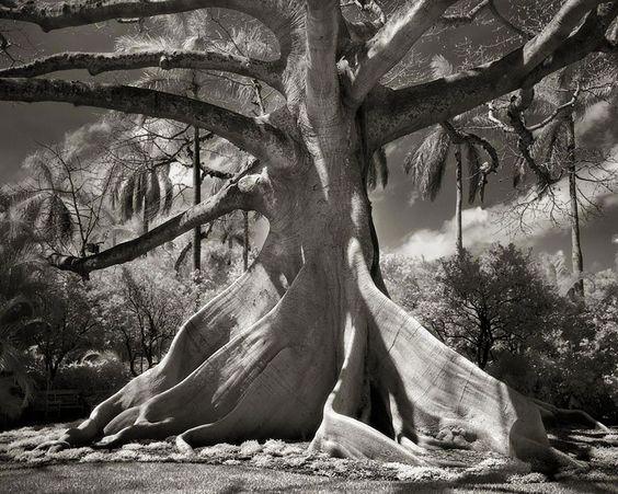 ancient-trees-beth-moon-10