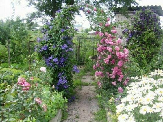 арка из розы и клематиса