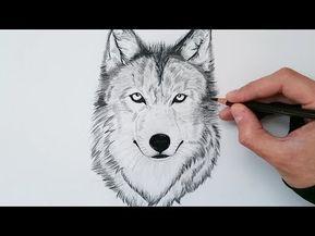 Como Dibujar Un Lobo Realista Explicado Paso A Paso How To Draw A Wolf Step By Step Youtube Como Dibujar Un Lobo Lobo Dibujo A Lapiz Lobos A Lapiz