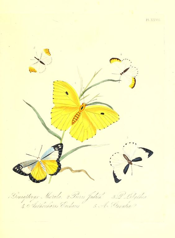 Natural history of the insects of India, - Biodiversity Heritage Library