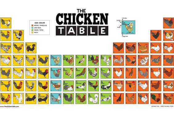 The Chicken Table Poster – Angry Squirrel Studio