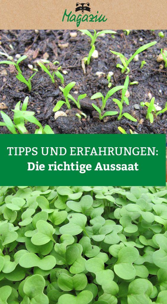 Start In Die Gartensaison Pflanzen Stauden Pflanzen Garten