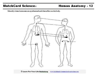 Worksheets, lesson plans, and science projects on the human body ...