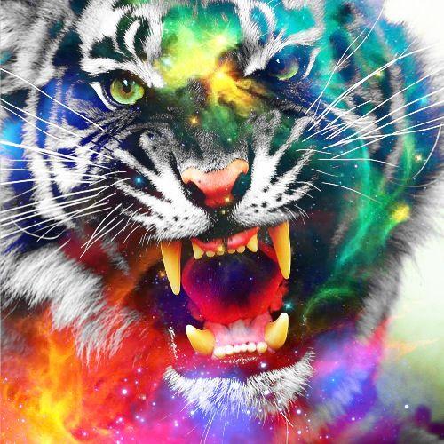 Cool Animal Edits