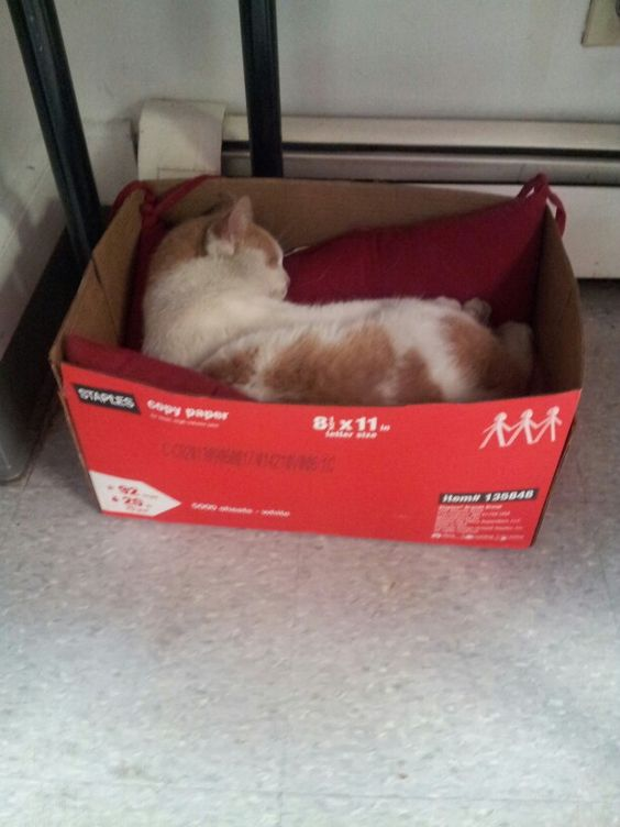 A box is a cats castle