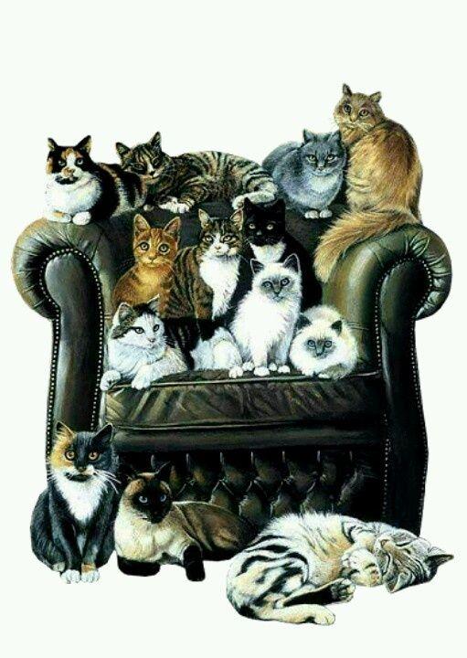 27b38ae3dc59ca4a4fe912e7b13a84d1--crazy-cat-lady-crazy-cats.jpg (511×720) #ComfyChair