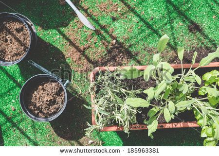 close up of pots and plants on the balcony at home - stock photo BUY IT FROM $1 ON SHUTTERSTOCK