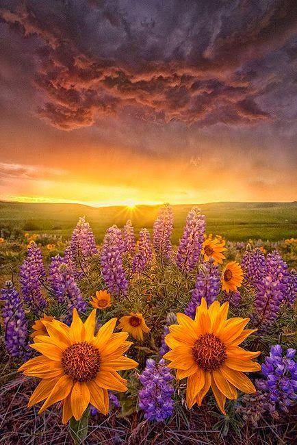 ภาพสวย ว ว ธรรมชาต ดอกไม สวยมาก Live Beautiful Nature Beautiful Landscapes Flowers
