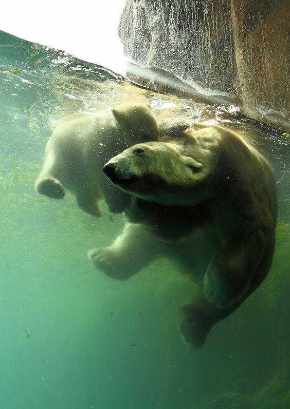 underwater bear hug