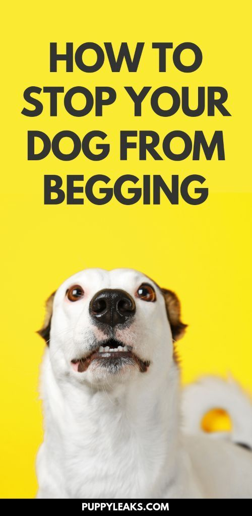 3 Easy Ways To Stop Your Dog From Begging Dog Training Training