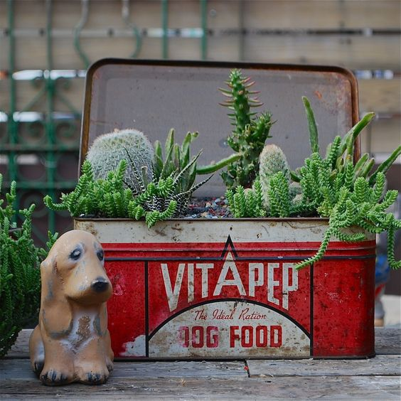 Succulents in a vintage dog food tin.  Cute!