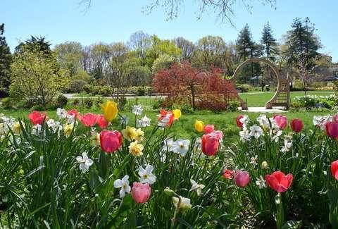 aca7f1e9e29579c3198f8ea1b3d141be - Botanical Gardens Mother's Day Brunch 2019