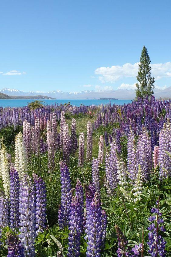 Livre foto de montanhas, céu, flores, jardim