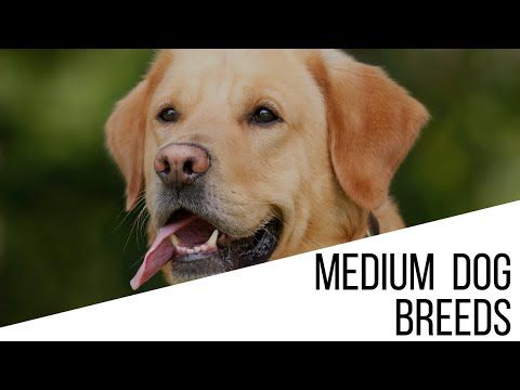 Dog Breed Selector What Breed Of Dog Should I Get Quiz Dog Breed Selector Dogs Medium Sized Dogs Breeds