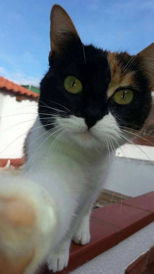 Os presento a Mora, mi gata tricolor de año y medio, con un carácter muy especial y super mimosa!!