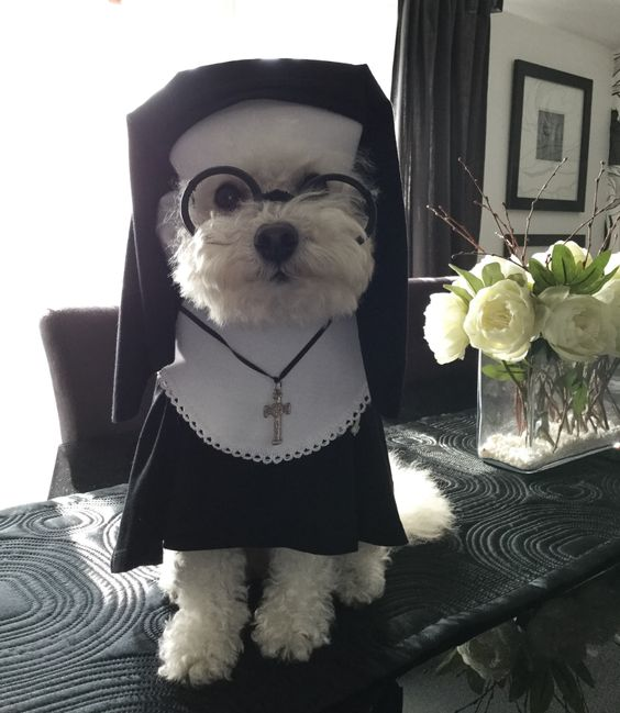 DIY Nun Dog Costume - Costume Yeti