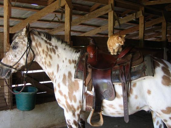 A horse and a yellow cat, I couldn't be happier.