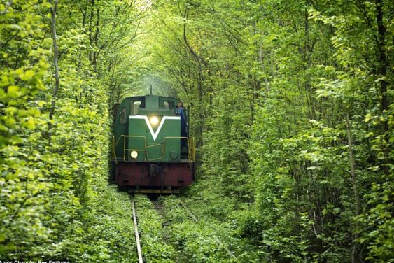 "Amazing leafy tunnel ""for trains and lovers"" in Ukraine... this is just cool!!"