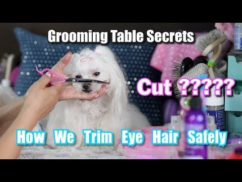 Pin On Dog Grooming Styles
