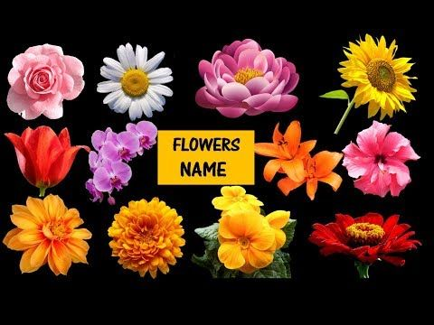 Learn Names Of Flowers Flower Names In Animation Video Learning For Kids Youtube Flower Names Flower Images With Name All Flowers Name
