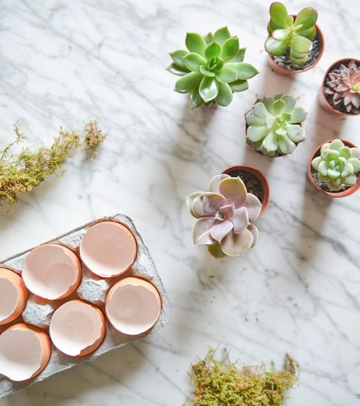 DIY: Easter Egg Succulents // Turn your leftovers into something new again with this super-easy DIY